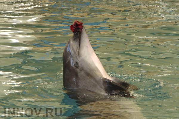 Ученые: дельфины тщательно планируют свои поиски пищи