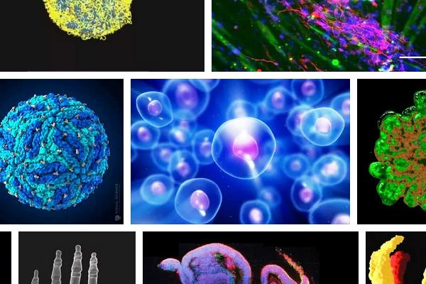 Ученые создали 3D-модель стволовой клетки
