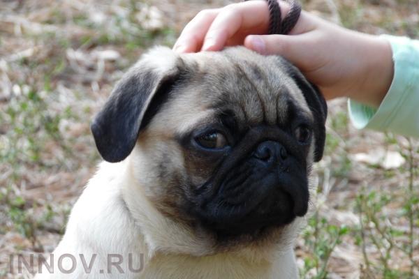 Ученые поведали онастоящей реакции собак наулыбку человека