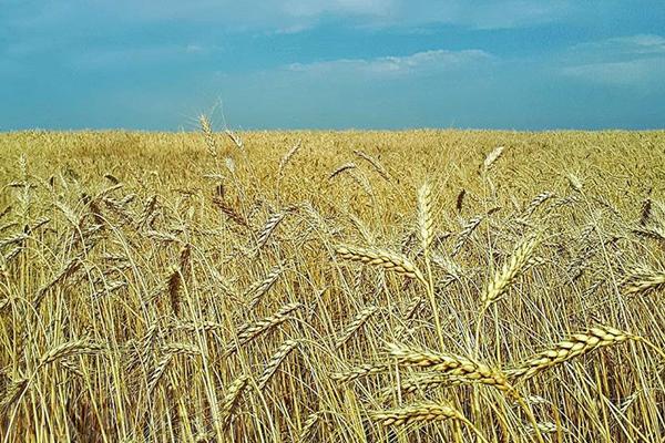 Российская Федерация впервый раз заняла 2-ое место вмире поэкспорту зерна