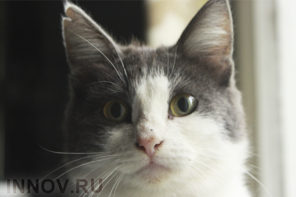Голландский программист впускает домой кота через систему распознавания морды